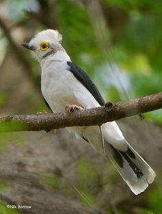 ethiopia_bird