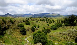 Dodola, Bale Mountains