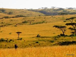 Senkele Wildlife Sanctuary, 2