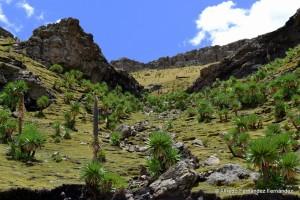 Simien Mountains National Park, 2